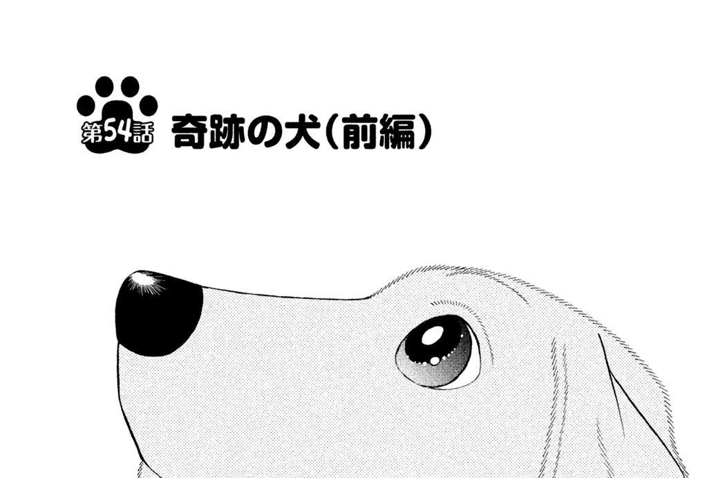 第54話 奇跡の犬(前編)
