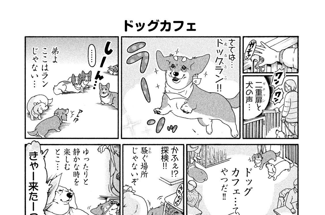 (3)看板犬