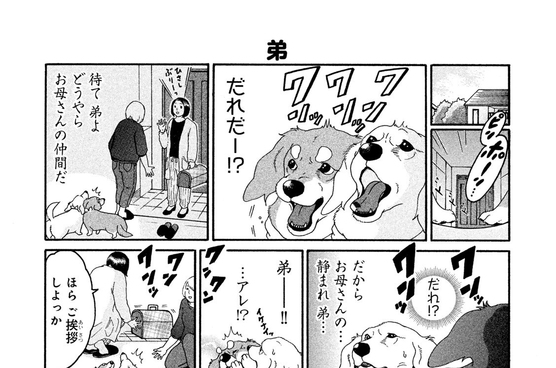 (7)義兄弟犬