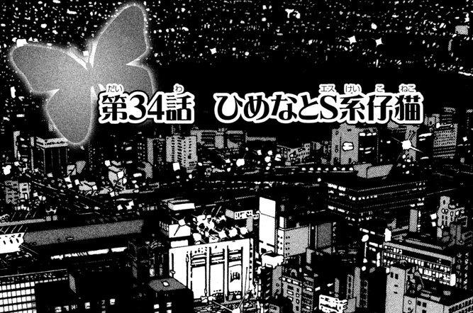 第34話 ひめなとS系(エスけい)仔猫