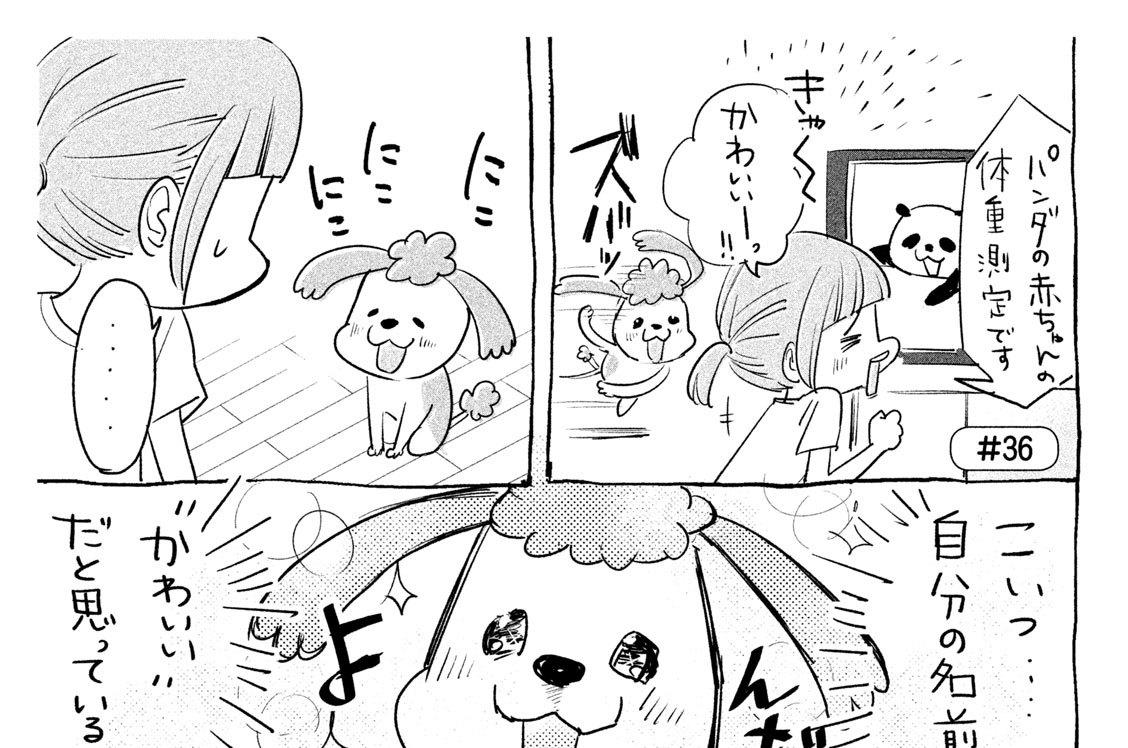 #36 犬と猫どっちも飼ってると カワイイ~☆のリアクションすら毎日たのしい
