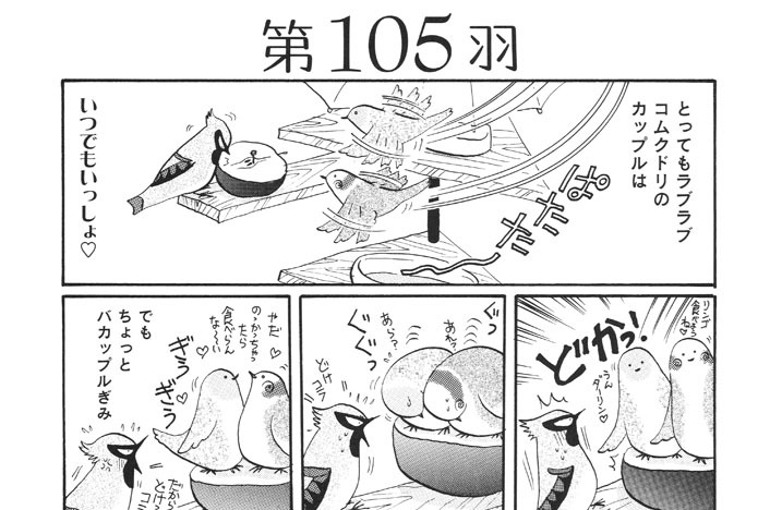 第105羽