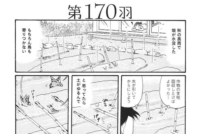 第170羽