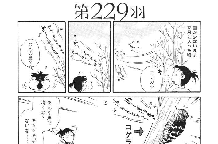 第229羽