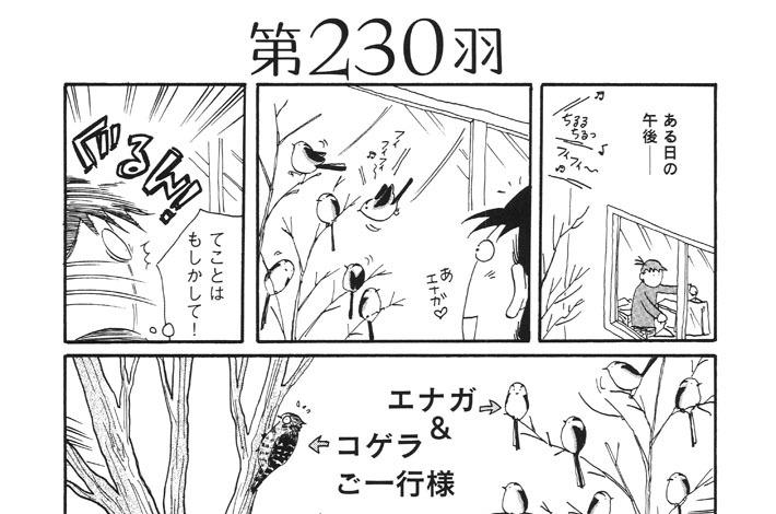 第230羽