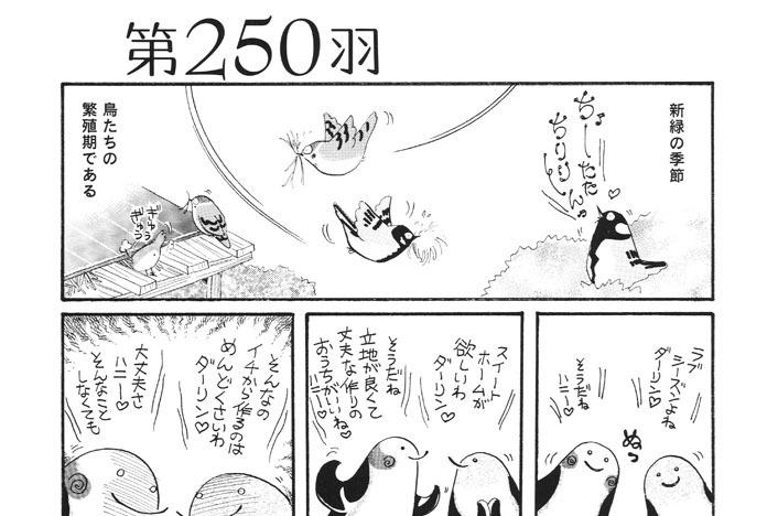 第250羽
