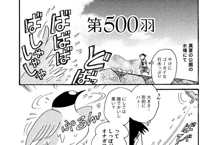 第500羽