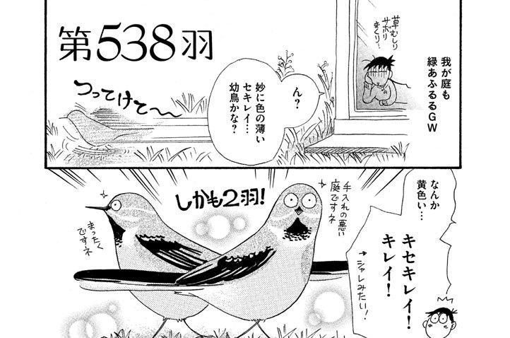 第538羽