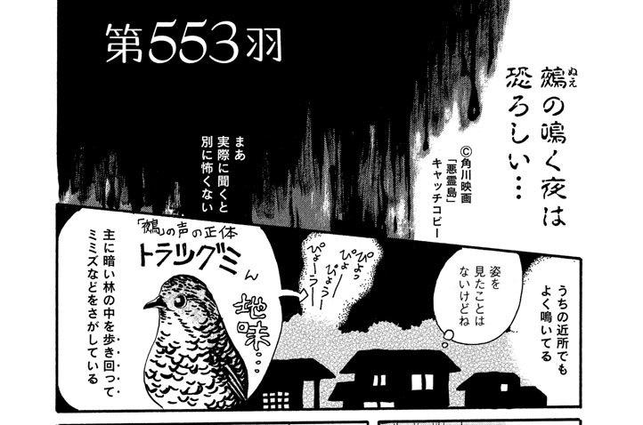 第553羽