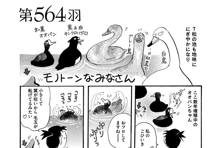 第564羽